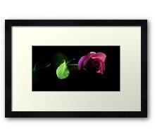 Rose Stem Framed Print