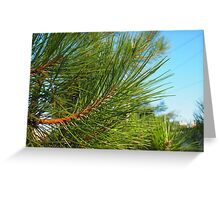 Side view of a pine branch with long needles closeup Greeting Card