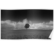 Lone tree - Nottinghamshire countryside  Poster
