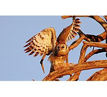 THE GIANT EAGLE OWL - and the weavers nest Photographic Print