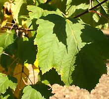 Green leaves closeup that begin to turn yellow by vladromensky