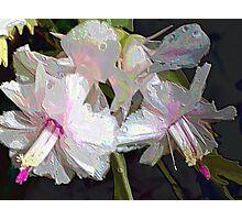 White Zygocactus II Photographic Print