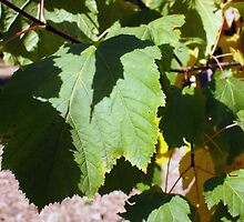 Green leaves close-up that begin to turn yellow by vladromensky
