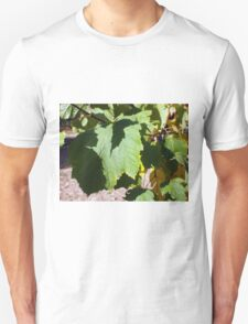 Green leaves close-up that begin to turn yellow Unisex T-Shirt