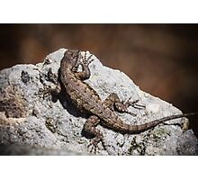 Mountain Lizard Sunbathing Photographic Print