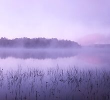 Muskoka Morning by Margi