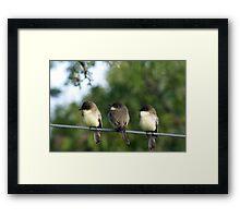 Let's Perch Together Framed Print