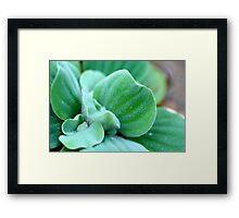 Furry Water lettuce Framed Print