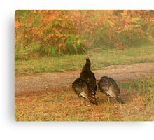 Wild Turkeys Metal Print