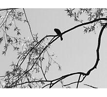 Lonely Bird Perch Photographic Print