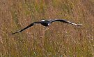 Eagle fly-past by Rudi Venter
