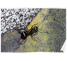 Black Ant Poster