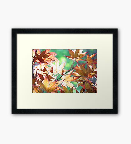 The Color of Morning Framed Print