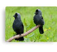 The Jackdaw Kids Canvas Print