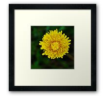 Near Perfection Framed Print