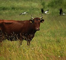 Cow and Storks by Antanas