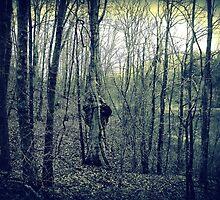Winking Tree  by Paul Lubaczewski