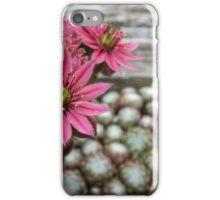Sedum flowers iPhone Case/Skin