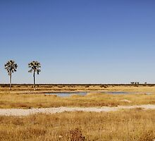 Etosha National Park by Natalie Broome