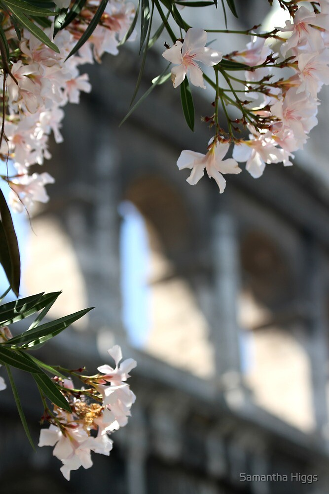 Flowers and Arches by Samantha Higgs