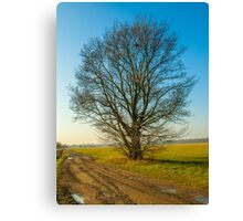 lonely tree on the meadow Canvas Print