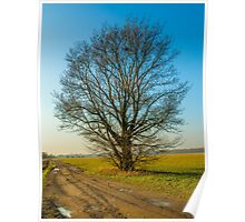 lonely tree on the meadow Poster
