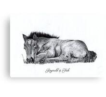 Sleeping Foal Design Canvas Print