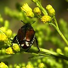Japanese Beetle by Linda  Makiej Photography