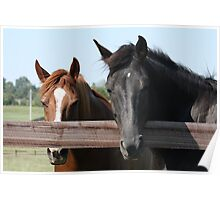Kentucky Thoroughbred 2 Poster