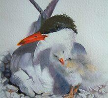 gull and chick by Natasha Hodgson