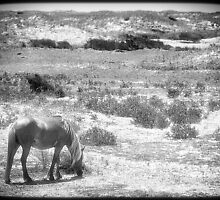Grazing through the past by Owed To Nature