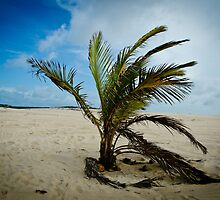 Solo palm tree by petitejardim