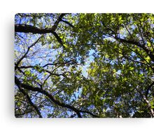 Upward View Of Trees Canvas Print