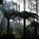 Tree ferns in the mist by Robyn Lakeman