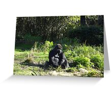 Solitary Gorilla  Greeting Card