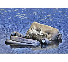 Lounging in the Swamp Photographic Print