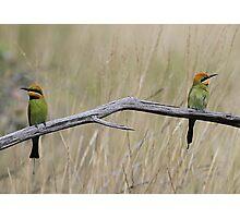 rainbow bee eaters Photographic Print