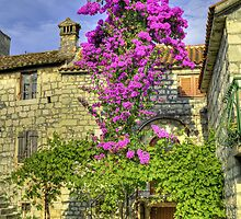 Old stonehouse and blooming tree. by cloud7