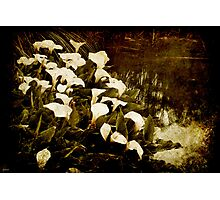 Consider the Lillies Photographic Print
