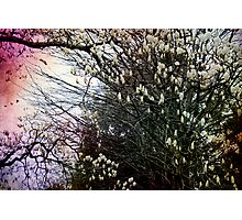 To Bloom in Beauty Photographic Print