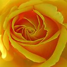Australia&#x27;s Olympic Gold Rose by Marilyn Harris