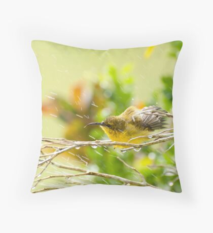 Raindrops keep falling - sunbird bathing. Throw Pillow