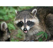Startled Raccoon Photographic Print