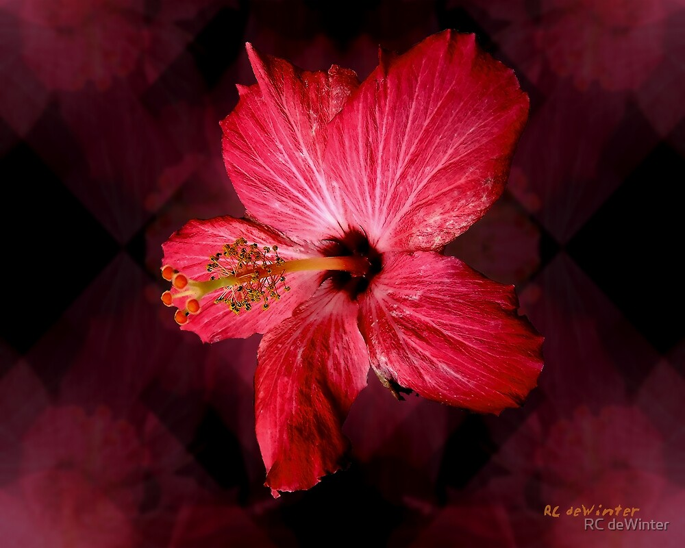 Hibiscus Throb by RC deWinter
