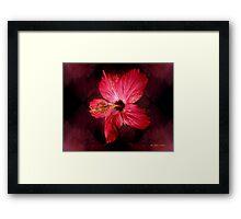 Hibiscus Throb Framed Print