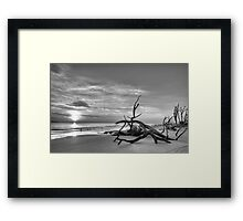 Driftwood Beach, black & white Framed Print