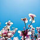 spring has sprung. by Erin  Sadler