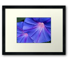 Morning glory twins Framed Print