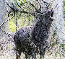 The rut is on by Alan Mattison