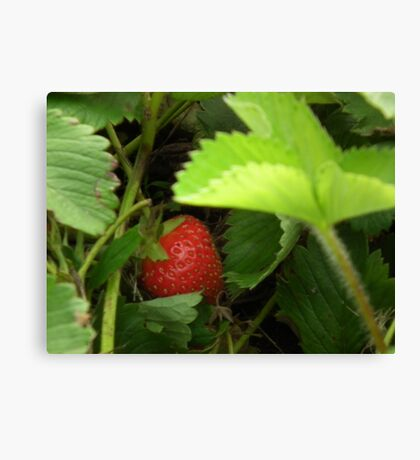 Strawberry Nestled Snug In Its Bed Canvas Print